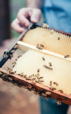 Bienenlehrgarten_Nebra_Wabe